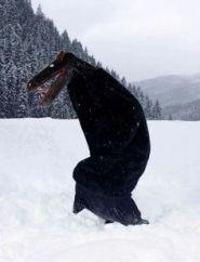 hooden-horse