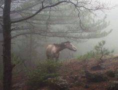 Helhest horse 2