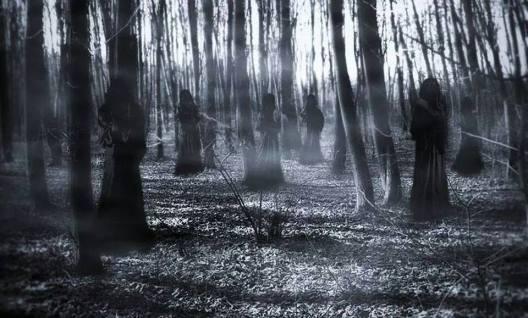 volva tree